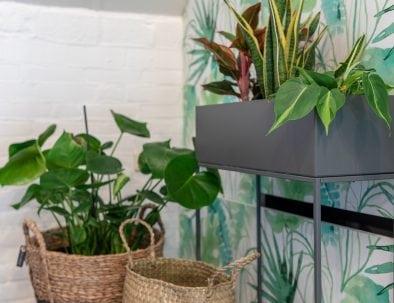 Planten Hutje Op De Heide Boxtel